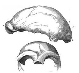 cropped-neanderthal-440.jpg