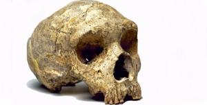 nedanderthal-skull_113349_1