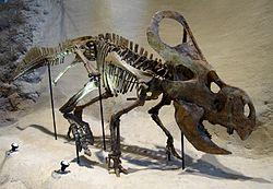250px-Carnegie_Protoceratops_andrewsi