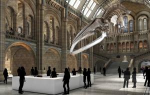 blue-whale-773
