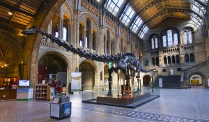 historical-picture-diplodocus-tail-up-054966