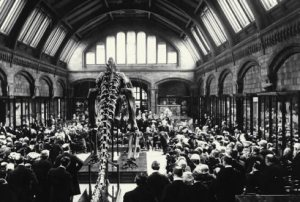 Dippy Unveiled: 1905
