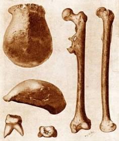 homo-erectus-300px