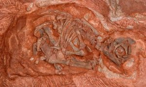 Massospondylus-007