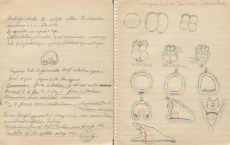 John Trinkaus's notebook for MBL Embryology Course: MBL History Project