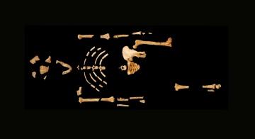 Objects: old bones like Lucy