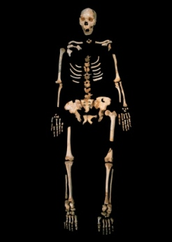 low_4_Homo-heidelbergensis_-Sima-de-los-Huesos_Credit-Javier-Trueba-Madrid-Scientific-Films