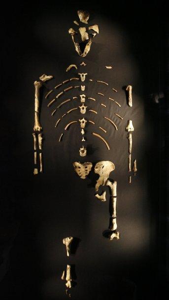 lucy-skeleton-from-apjpg-b80d96fff9e9a9e0