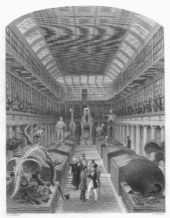 800px-1853_-_hunterian_museum