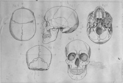 crania-typia