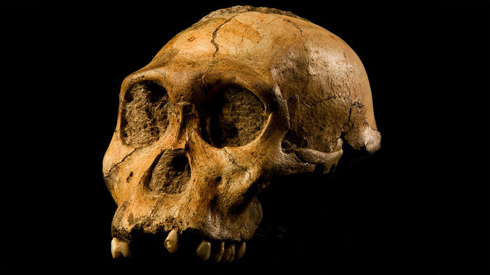 ep_1280px-Australopithecus_sediba_16x9 (1)