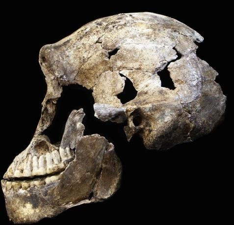 H-naledi-new-skull-2-views